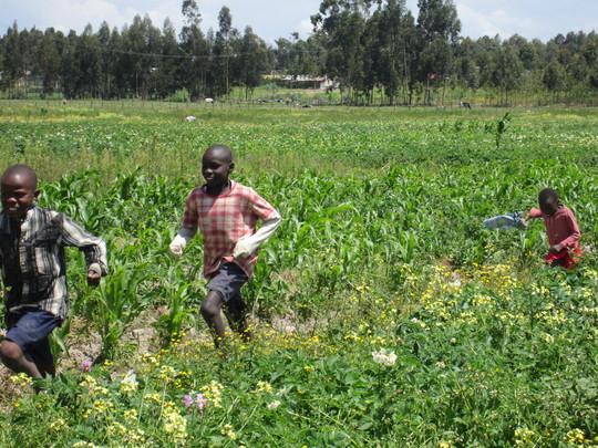 David, Dikon and Esther run through the fields
