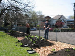 Planting in our garden!