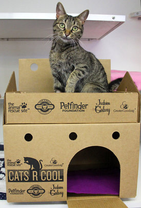 Petfinder Foundation cat castle