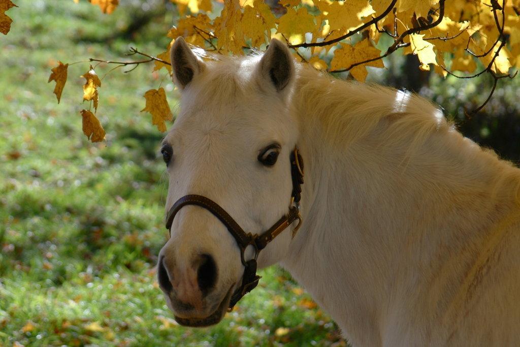 Tumbleweed the pony