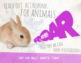 R.O.A.R. Fund - Reach.Out.Act.Respond.