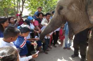 Kids and adults meet Lucky the elephant