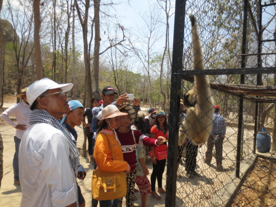 Meeting an endangered gibbon for the first time!