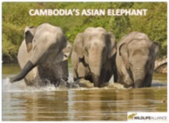 Asian Elephant educational chart