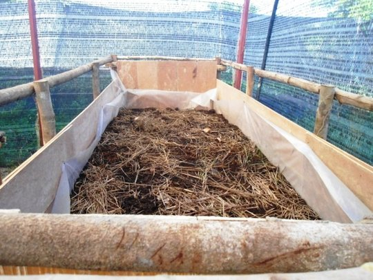Vermicompost bin containing redworms and scraps
