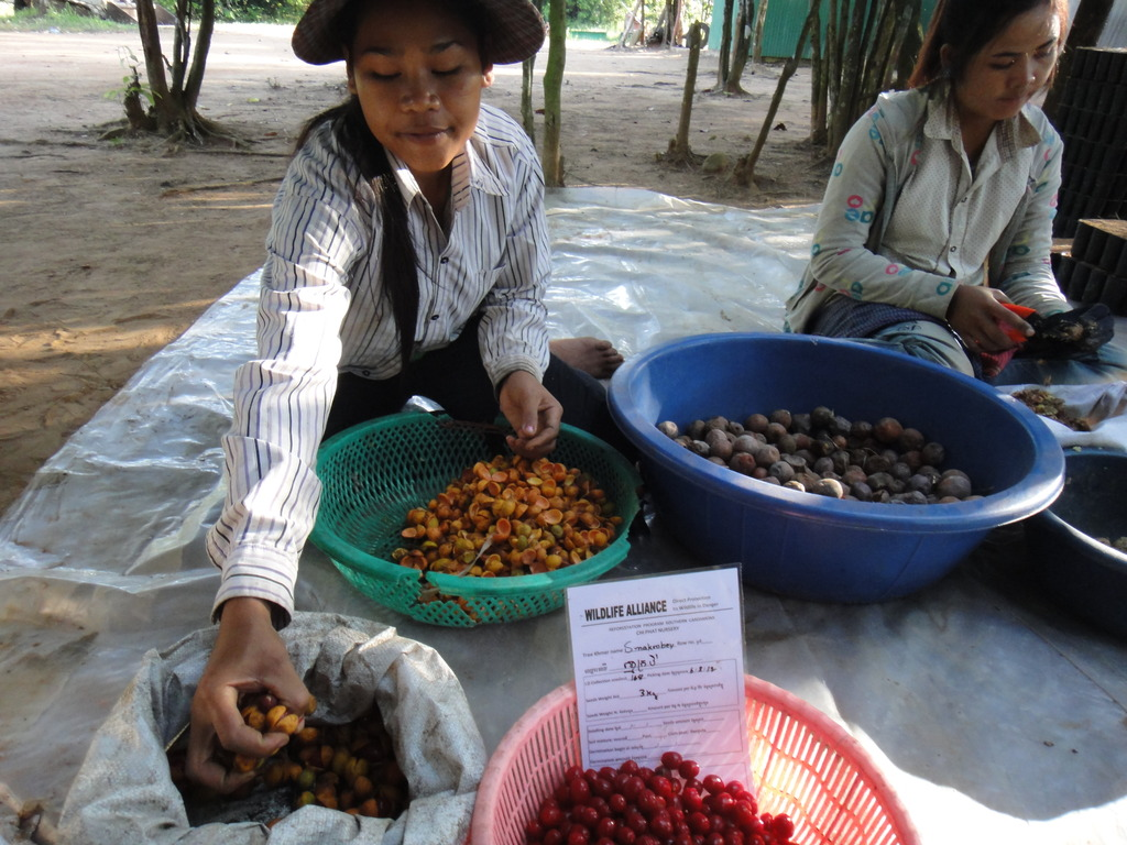 Seed preparation for re-forestation