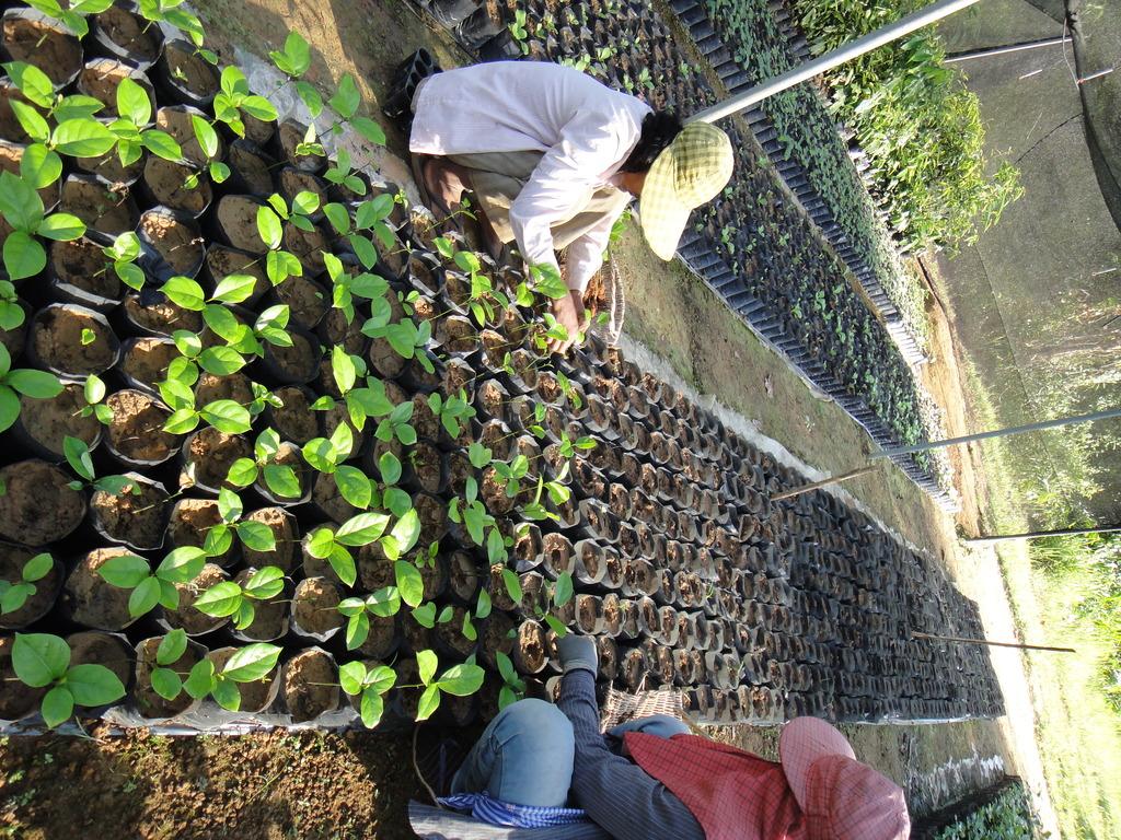 Transfering Seedlings to Shade Net