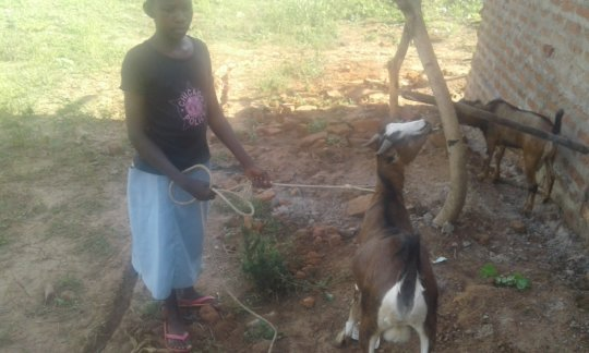 Angella taking her she-goat for feeding