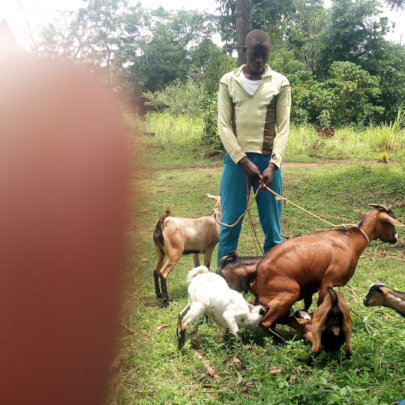ORPHAN WITH HIS GOATS