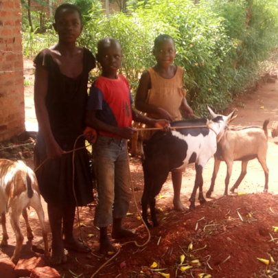 ORPHANS WITH GOATS AT HOME