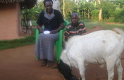 Support 320 orphans with improved goats in Uganda
