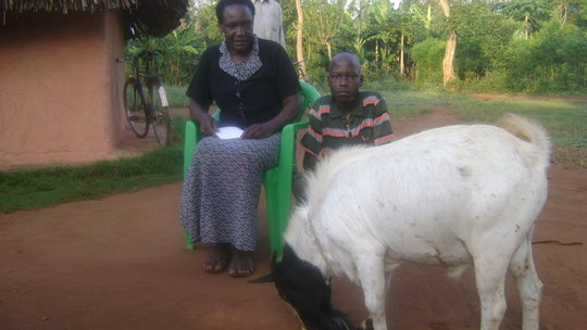 Support 320 orphans with goats in Uganda
