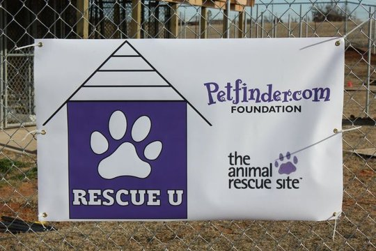 Help Students to Save Homeless Pets in the US