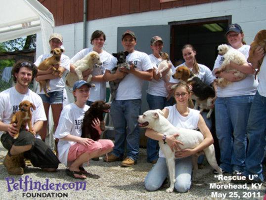 Student Volunteers building new dog beds