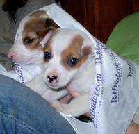Puppies saved