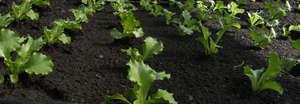 Clean, healthy crops