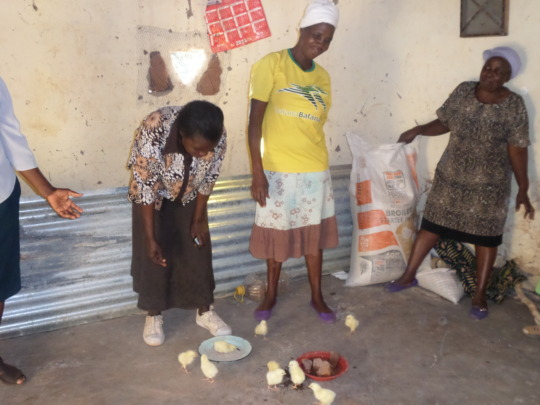 The women feeding the chicks