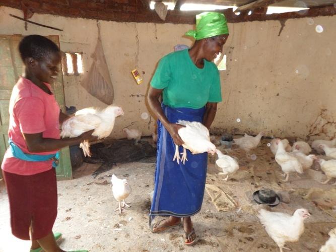 Customer buying a chicken