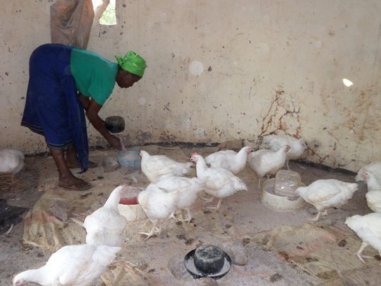 One of the women feeding the chickens
