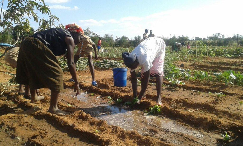 Community Gardening Project