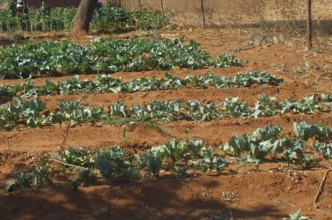 Help Rural Women Start Income Generating Projects
