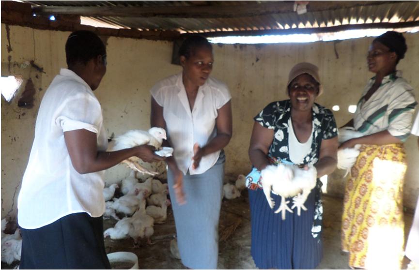 Women holding chickens