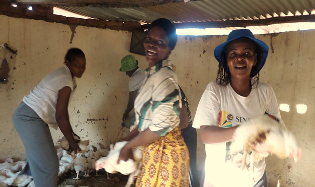 Women Showing Off Their Chickens