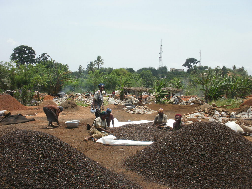 The women processing the palm kernel