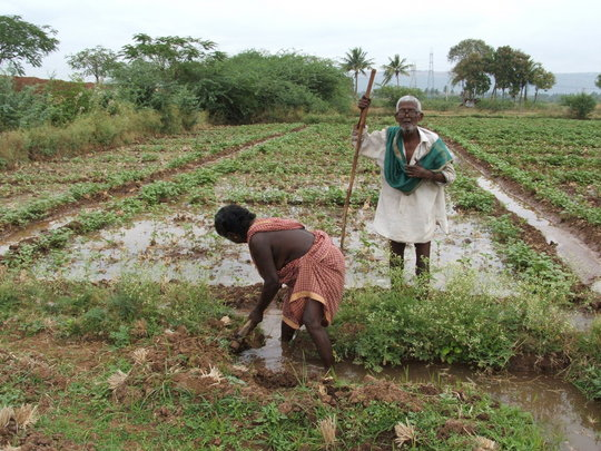 Organic Farming Training to 500 Farmers in India