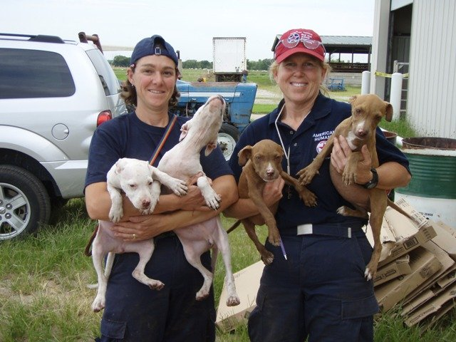 Japan Tsunami Animal Emergency Relief Program