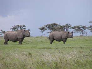 Earthwatch Expedition: Saving Kenya's Black Rhinos