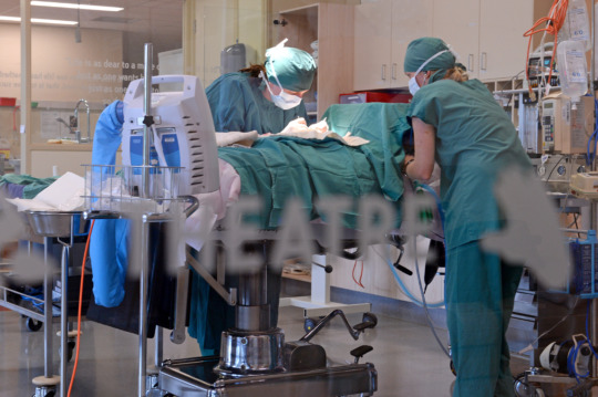 The hospital team operating on a wildlife patient
