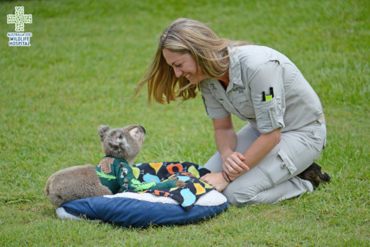 Pinto the koala smiling at his doctor