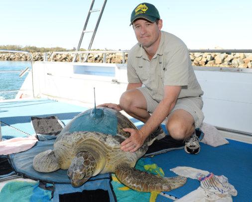 Rescuer Toby releasing a sea turtle