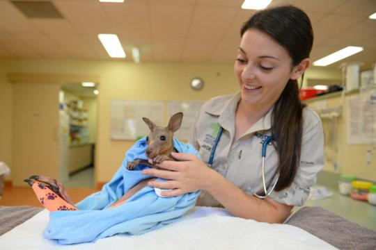 Vet nurse Jayde with an orphaned kangaroo joey
