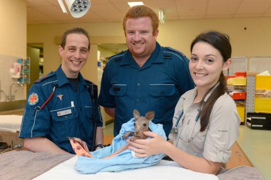 Vitae the kangaroo joey and her rescuers