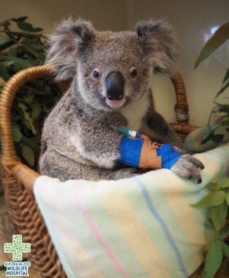 Treating patients at Aust Zoo Wildlife Hospital