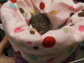 Little Oliver keeping nice and warm in his pouch