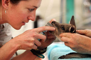 Australia Zoo Wildlife Hospital