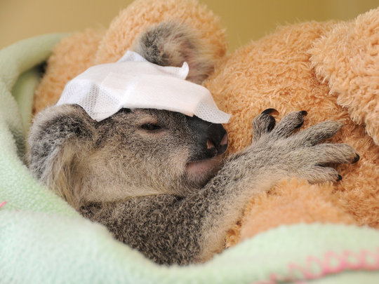 Treating patients at Australia's Wildlife Hospital