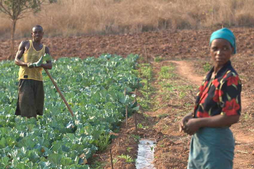 After Mozambique's civil war, Lucas Chingore was able to regain access to his fields. He found Opportunity International and now uses their loans and savings to improve his farm. Today, Lucas provides nutritious food, medical care and education for his 5 children, while bolstering his local economy.