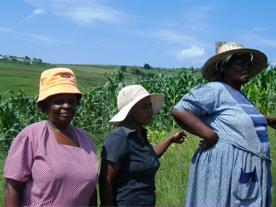 Meet the lady farmers of the Gcumisa Cooperative