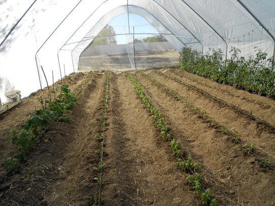 Our new greenhouse with drip irrigation technology