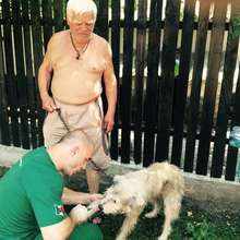 helping an elderly man with dog and collar