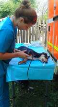 prepping dogs for spay
