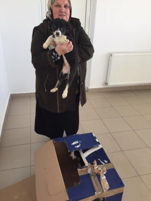 Spay and Neuter for 3,000 dogs in Romania