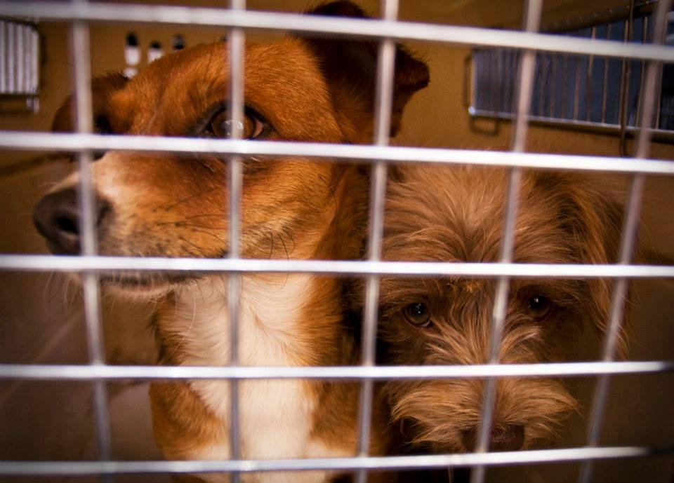 dog in crate waiting for spaying