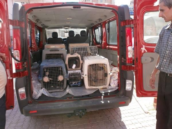 New RAR van collected strays for spay/neuter