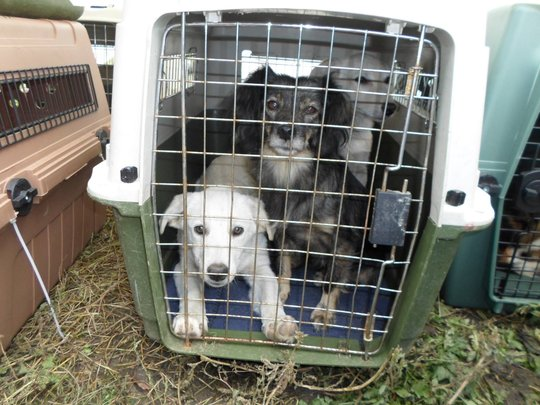 dogs brought in from countryside