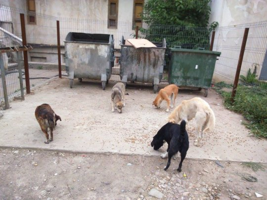 Need for spay and neuter continues